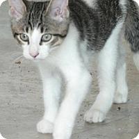 Adopt A Pet :: Hercules - Hamilton, ON