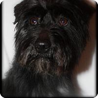 Adopt A Pet :: Bordentown NJ - Angus - New Jersey, NJ