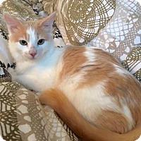 Adopt A Pet :: Darian - Bellevue, WA
