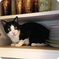 Adopt A Pet :: Lovebug - Orange, CA