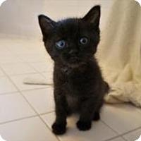 Adopt A Pet :: Butch Cassidy - Union, KY