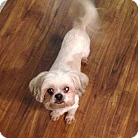 Adopt A Pet :: Marvin - Encino, CA