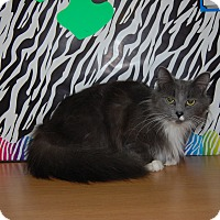 Adopt A Pet :: Clover - North Judson, IN