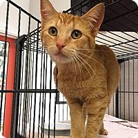 Adopt A Pet :: Phoenix - Oakland, CA