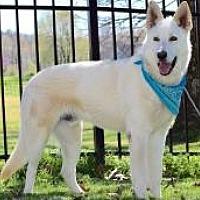 Adopt A Pet :: Raylan - Princeton, KY