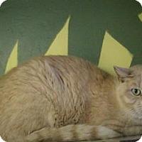 Adopt A Pet :: Winston - West Des Moines, IA