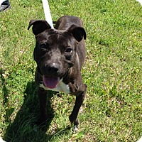 Adopt A Pet :: Juno - Larned, KS