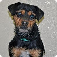 Adopt A Pet :: Russell - Port Washington, NY