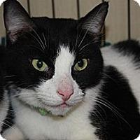 Adopt A Pet :: Oreo (MP) - Little Falls, NJ