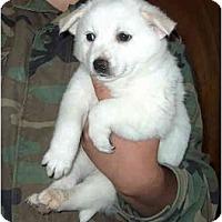 Adopt A Pet :: Sir Sampson ADOPTED - Phoenix, AZ