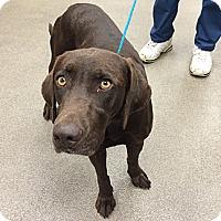Adopt A Pet :: Mandie - Cumming, GA