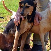 Adopt A Pet :: Delta - Homewood, AL