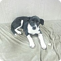Adopt A Pet :: Jackie in CT - Manchester, CT