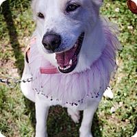 Adopt A Pet :: Molly W - Cumming, GA