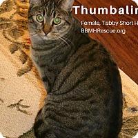 Adopt A Pet :: Thumbalina - Temecula, CA