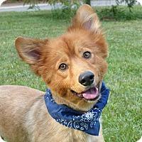 Adopt A Pet :: Teddy - Mocksville, NC