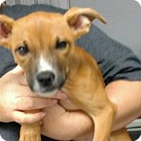 Adopt A Pet :: FLICK - Sandusky, OH