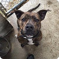 Adopt A Pet :: Willow - Bishopville, SC