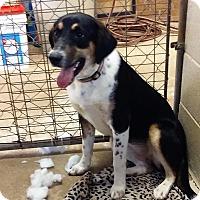 Adopt A Pet :: Holly - Ashland, AL