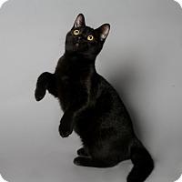 Adopt A Pet :: Dexter - Atlantic, NC