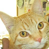 Adopt A Pet :: Joe West - Buhl, ID