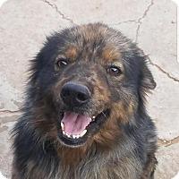 Adopt A Pet :: Ringo - Odessa, TX