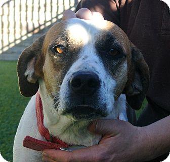 Beagle Mix Dog for adoption in white settlment, Texas - Jenny
