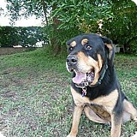 Adopt A Pet :: TUCKER - Mission Hills, CA