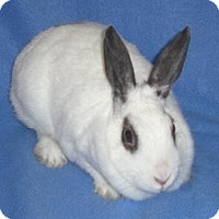 Adopt A Pet :: skittles - Woburn, MA