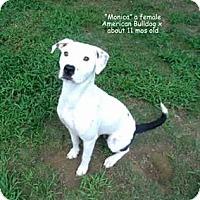Adopt A Pet :: Monica - Gadsden, AL