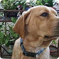 Adopt A Pet :: Prince - Denver, CO