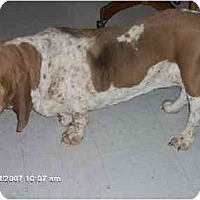 Adopt A Pet :: Flora - Phoenix, AZ