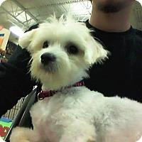 Adopt A Pet :: Kimmy - Miami, FL