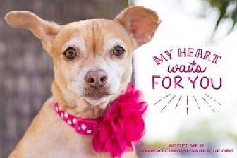 Chihuahua Mix Dog for adoption in Mesa, Arizona - Lady