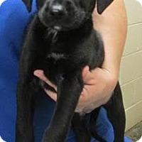 Adopt A Pet :: Jack - Millersville, MD