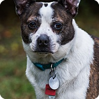 Adopt A Pet :: Monty - Greensboro, NC
