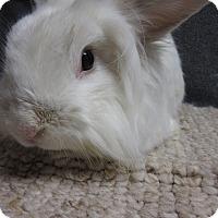 Adopt A Pet :: Julius - Newport, DE