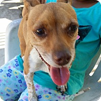 Adopt A Pet :: Roxy - Fullerton, CA