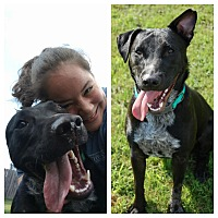 Adopt A Pet :: JAKE - Nashville, TN