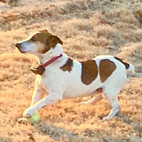 Adopt A Pet :: Rocket in Enid, OK - Austin, TX