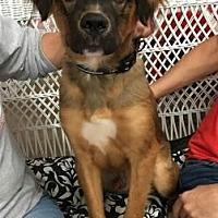 Adopt A Pet :: Bones - Centerville, GA
