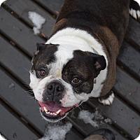 Adopt A Pet :: Harley & Higgins - Westport, CT