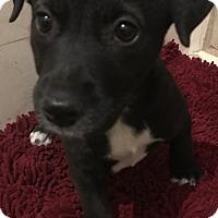 Adopt A Pet :: Tania - Tucson, AZ