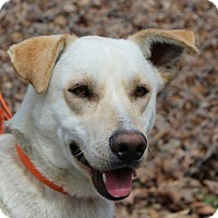 Adopt A Pet :: Marcus - Spring Valley, NY