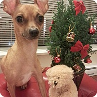 Adopt A Pet :: Joey - Surrey, BC
