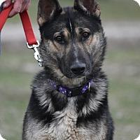 Adopt A Pet :: Marco - Hamilton, MT