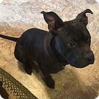 Adopt A Pet :: Mack - Somerset, KY