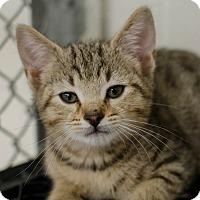Adopt A Pet :: Max - Greenwood, SC