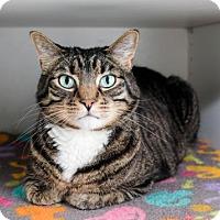 Adopt A Pet :: Ziggy - Boise, ID