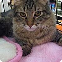 Adopt A Pet :: Moses - Modesto, CA